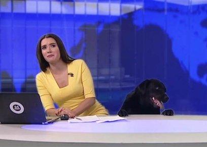 المذيعة خلال البث المباشر للنشرة الإخبارية