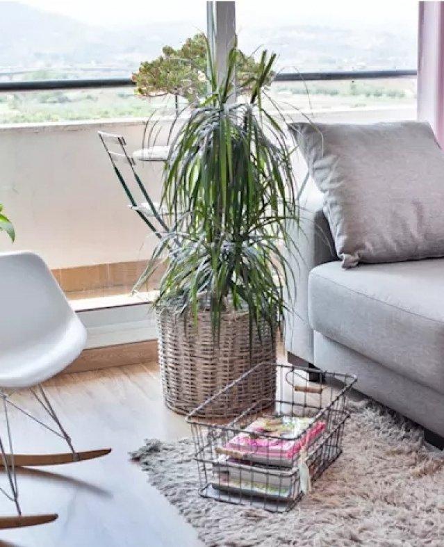 6 شروط قبل استخدام الزرع في ديكور المنزل